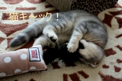 炸裂猫キック!_c0178104_15595881.jpg
