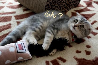 炸裂猫キック!_c0178104_166713.jpg
