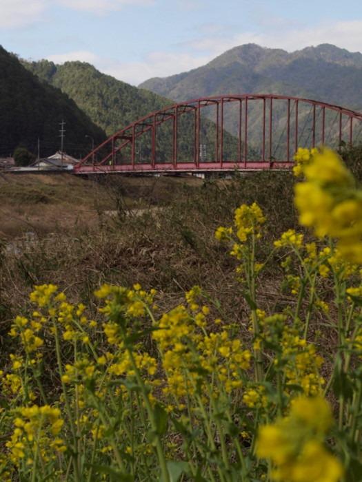 赤い橋と菜の花_c0116915_0184754.jpg