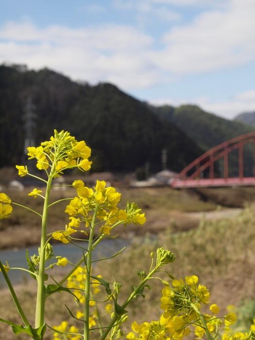 赤い橋と菜の花_c0116915_019319.jpg