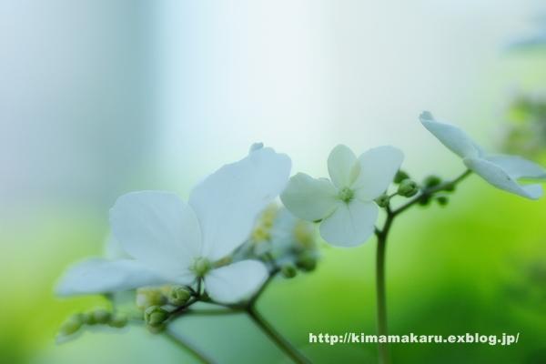 我が家の逸材、チョイ太郎_a0229217_7594449.jpg
