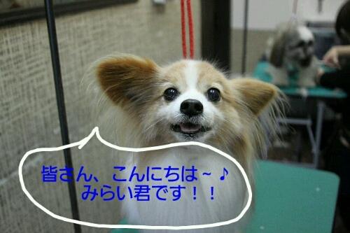 b0130018_2317972.jpg