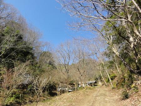 ウグイスが鳴いています  in  孝子の森_c0108460_1822634.jpg