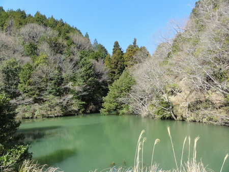 ウグイスが鳴いています  in  孝子の森_c0108460_1823474.jpg