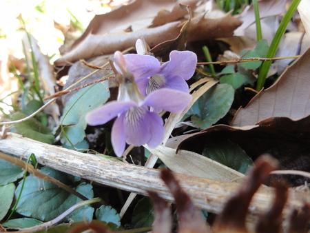 ウグイスが鳴いています  in  孝子の森_c0108460_18243835.jpg