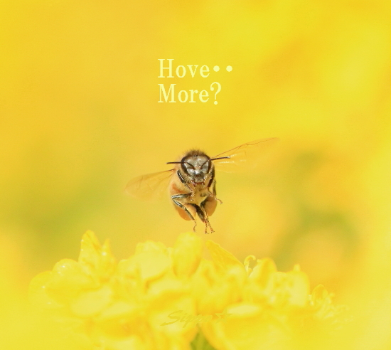 ■■ 春一番の働き者 ~ミツバチ~ 3 ■■_c0195662_22573013.jpg