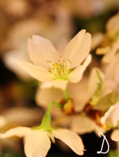 春爛漫_d0110462_15561916.jpg