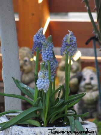 春の訪れに誘われてガーデニング♪(2)_a0243064_20134534.jpg