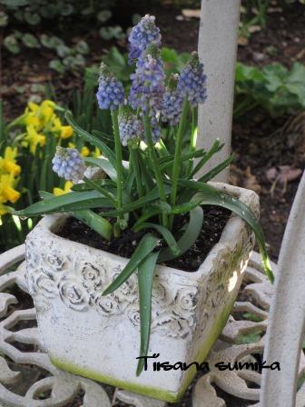 春の訪れに誘われてガーデニング♪(2)_a0243064_2014792.jpg