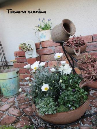 春の訪れに誘われてガーデニング♪(2)_a0243064_2024928.jpg