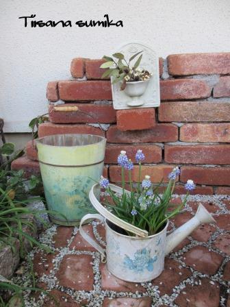 春の訪れに誘われてガーデニング♪(2)_a0243064_2052239.jpg