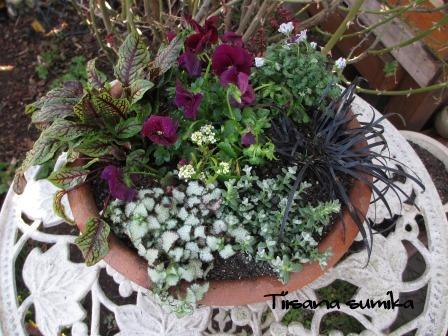 春の訪れに誘われてガーデニング♪(2)_a0243064_2084690.jpg