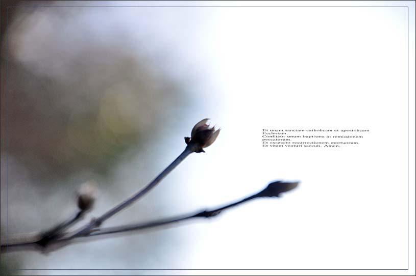 f0198771_015792.jpg