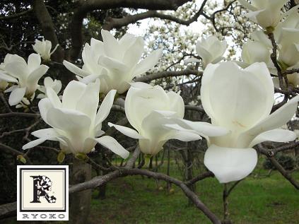 春はもうすぐ!_c0128489_20312955.jpg