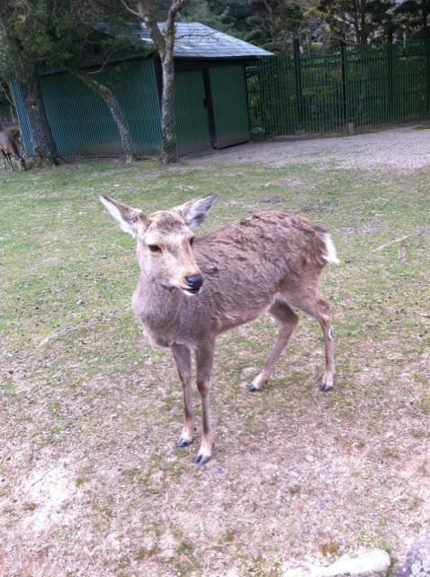 鹿と煎餅_c0184989_15222924.jpg