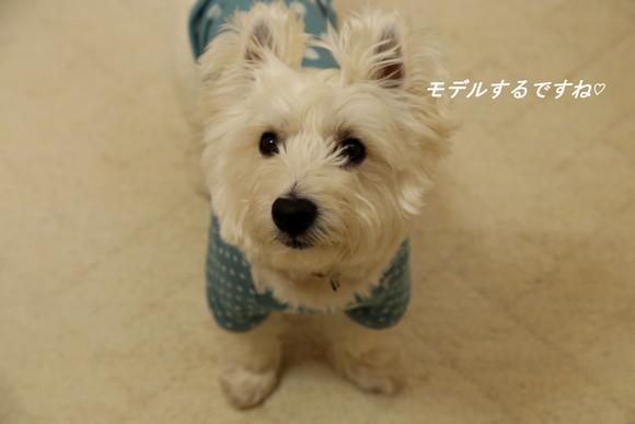 手作りのお洋服☆_a0161111_22254534.jpg