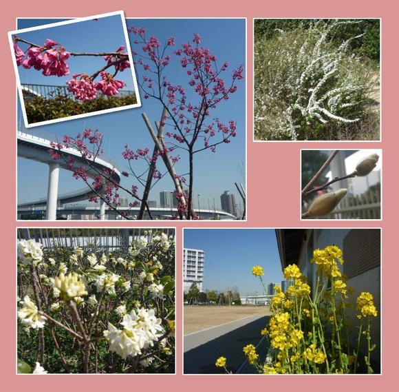 春の花が咲き始めました_e0235911_10445777.jpg