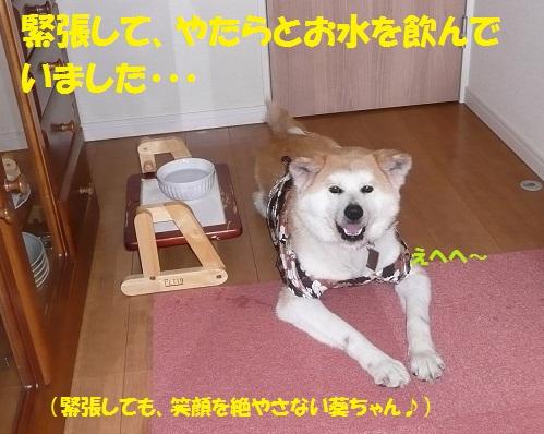 f0121712_5183776.jpg