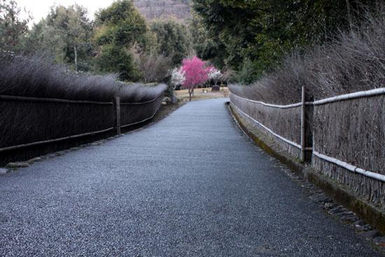 嵐山亀山公園 紅白梅_e0048413_2152088.jpg