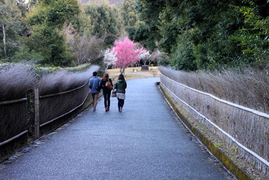 嵐山亀山公園 紅白梅_e0048413_2153699.jpg