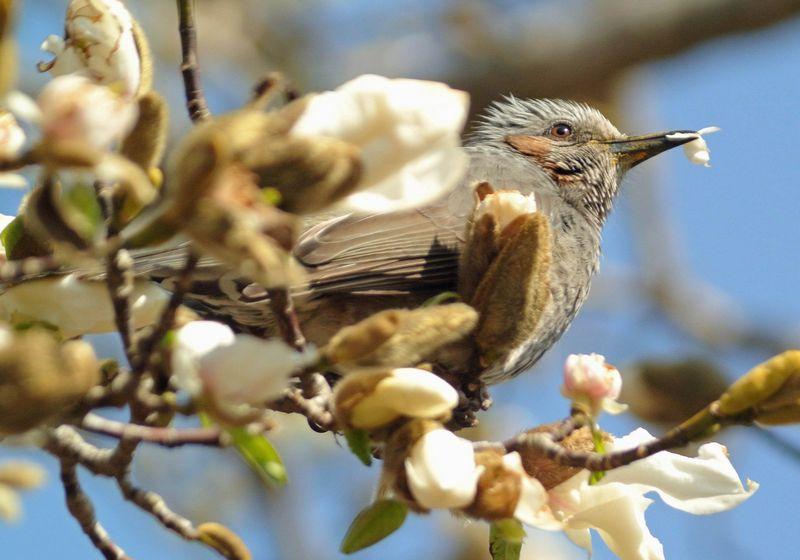 今日の鳥見、ひさしぶりにジョウビタキ_e0089232_1121416.jpg