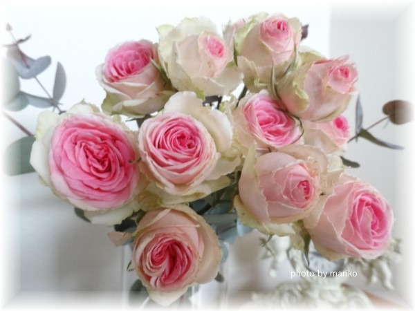 薔薇ミミエデン_d0165645_10344748.jpg