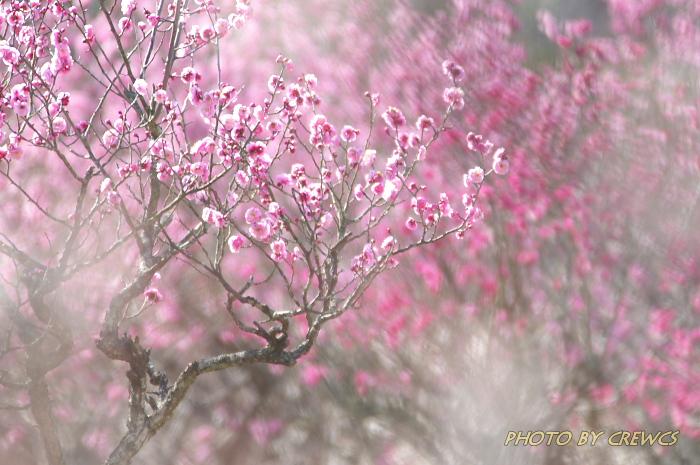 春麗らかな週末_e0056449_942164.jpg