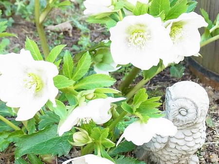 春!_a0223650_13164775.jpg