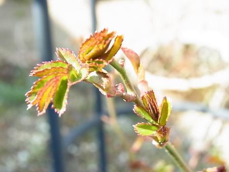春!_a0223650_1320257.jpg