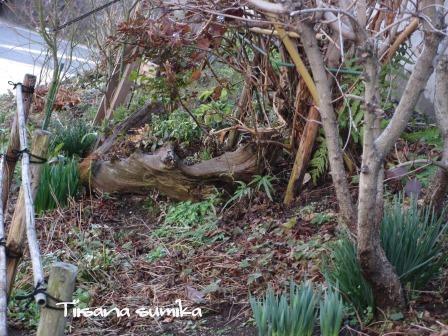 春の訪れに誘われてガーデニング♪(3)_a0243064_22133195.jpg