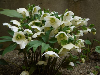 好きな花たち_a0233896_23314389.jpg