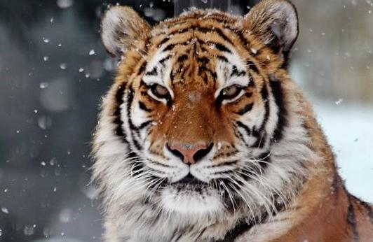 雪がお似合い_c0155902_13193819.jpg