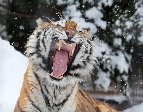 雪がお似合い_c0155902_13202490.jpg