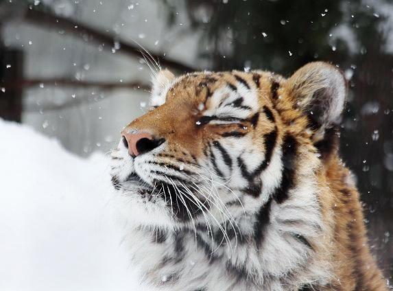 雪がお似合い_c0155902_13213644.jpg