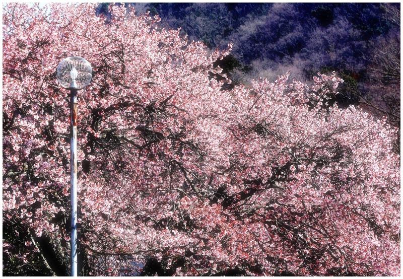 街灯のある風景201 in修善寺温泉_d0151003_23582986.jpg