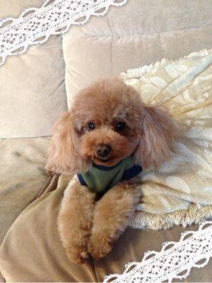 Holiday with my dog_b0111306_17255663.jpg