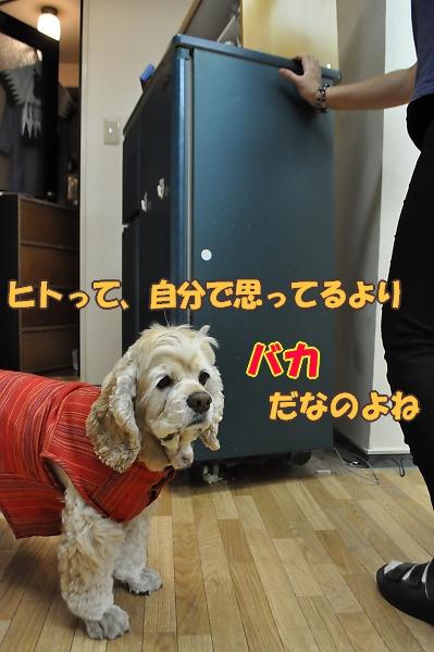 b0067012_145485.jpg