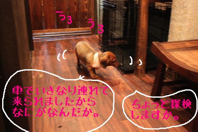 b0130018_20113336.jpg