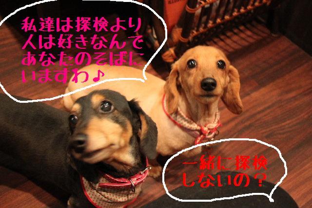 b0130018_20114063.jpg