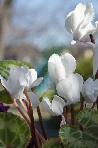 春の光に_f0155431_21433435.jpg