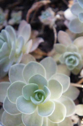 春の光に_f0155431_2144156.jpg