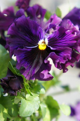 春の光に_f0155431_21445429.jpg