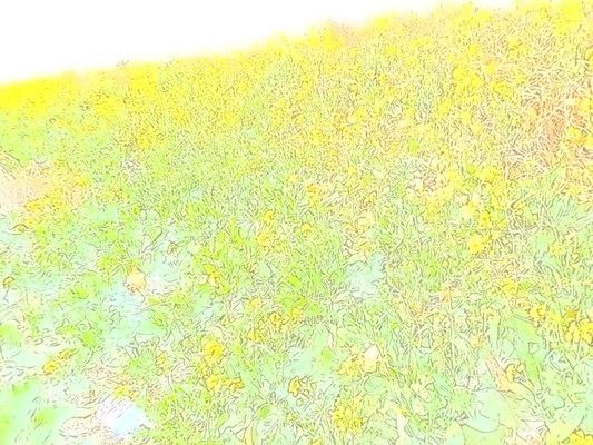 a0203841_17493922.jpg