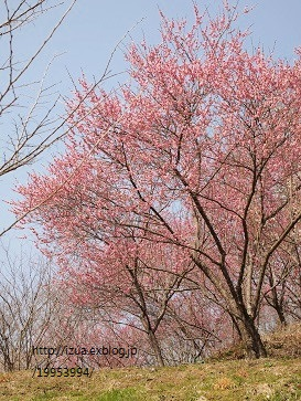 パン屋さんと花フェスへ_e0214646_1685671.jpg