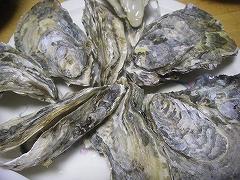 牡蠣と鶏ちゃん_e0064783_17535184.jpg