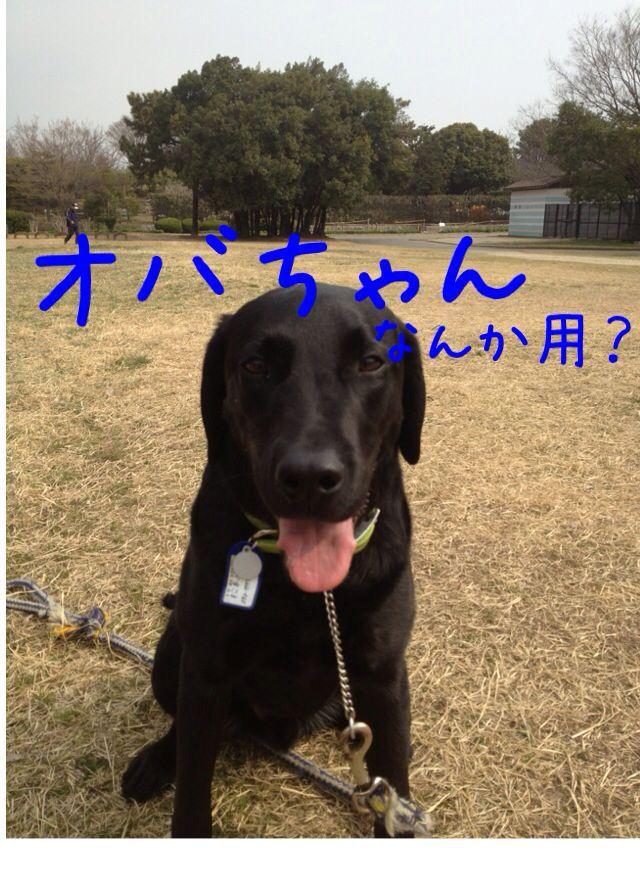 小太郎劇場_e0244283_3144550.jpg