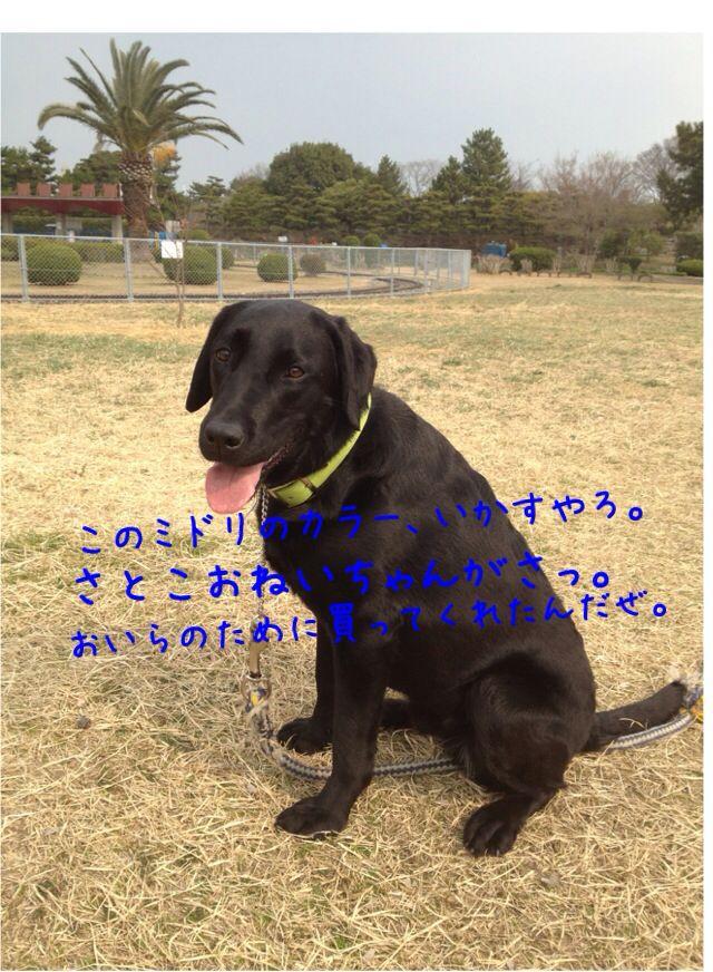 小太郎劇場_e0244283_3145361.jpg
