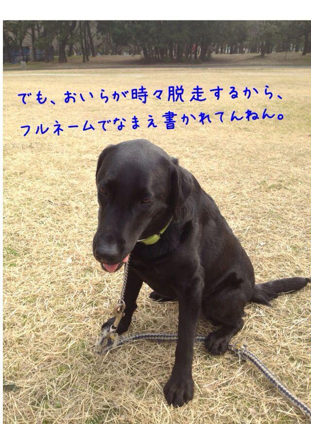 小太郎劇場_e0244283_3145555.jpg