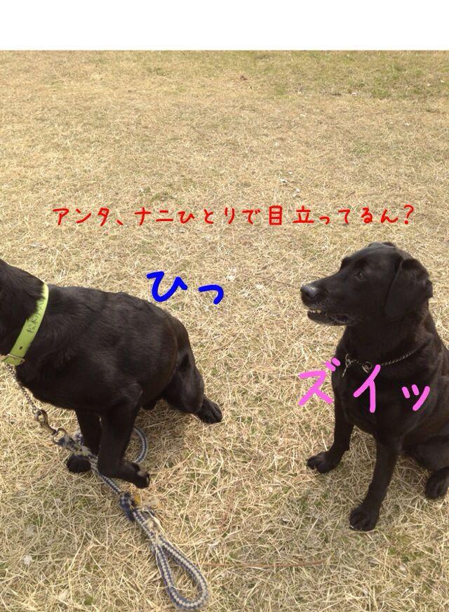 小太郎劇場_e0244283_314571.jpg