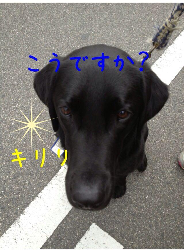 小太郎劇場_e0244283_31558.jpg